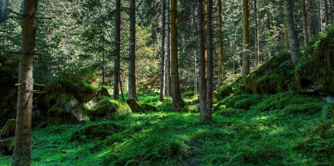 Miško supirkimas su žeme